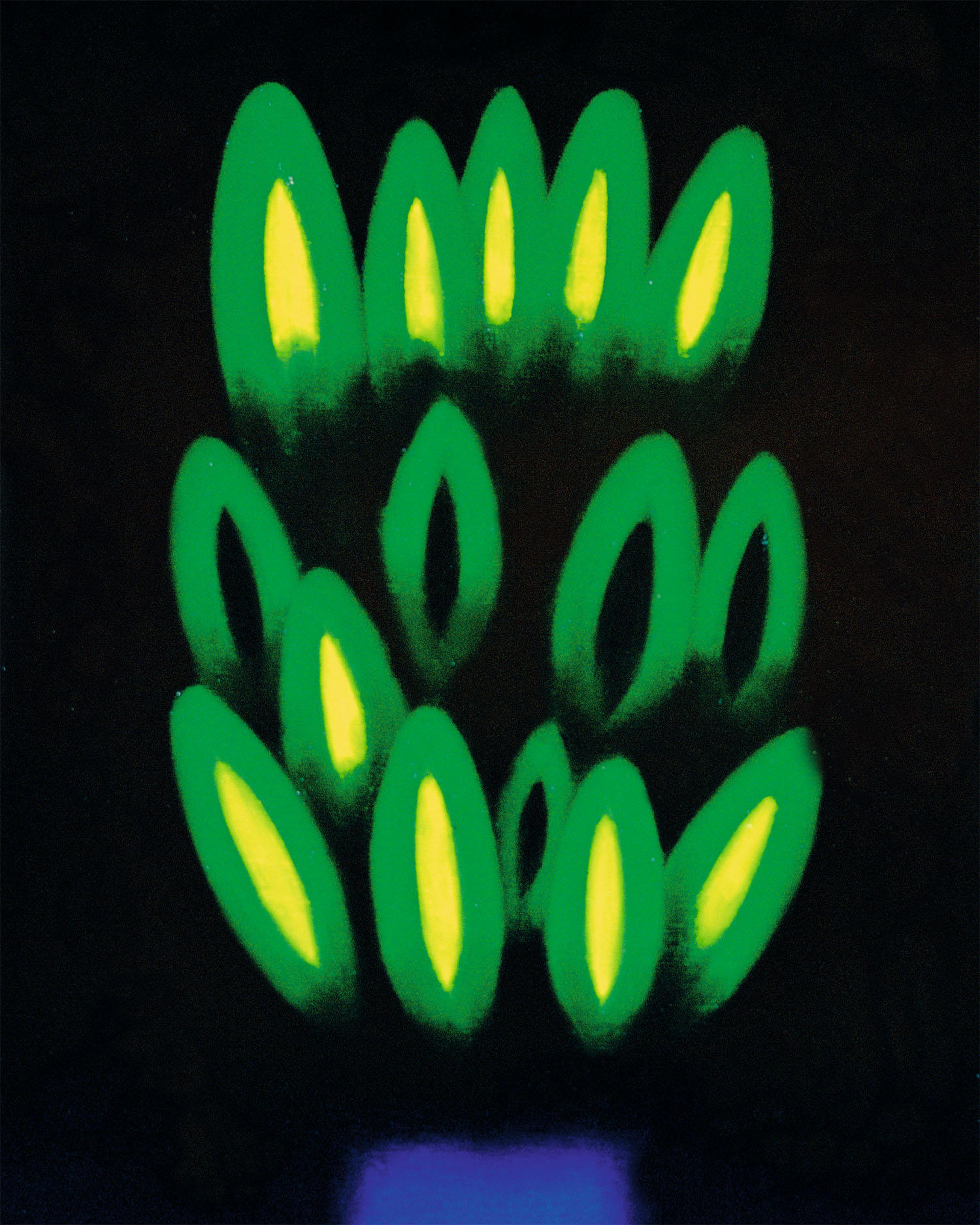 Cactus. Josep Navarro Vives. 1999, Oli sobre tela, cm 46 x 33.
